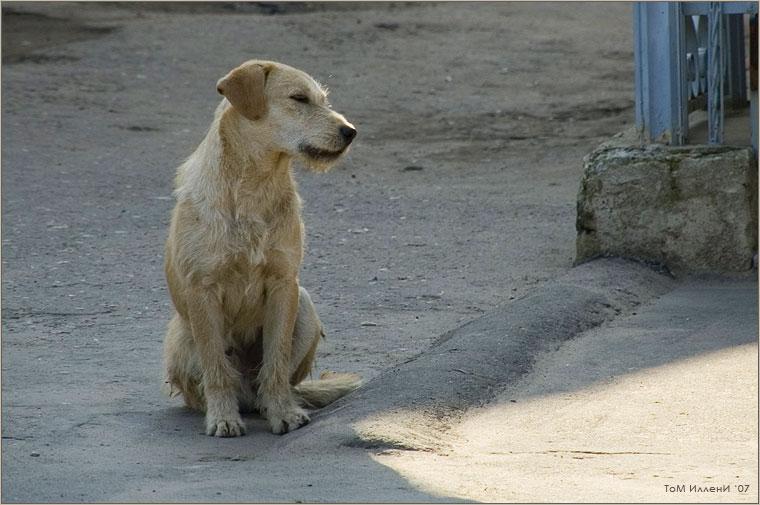 Собаки Боровска