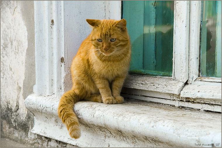 Кошки Боровска