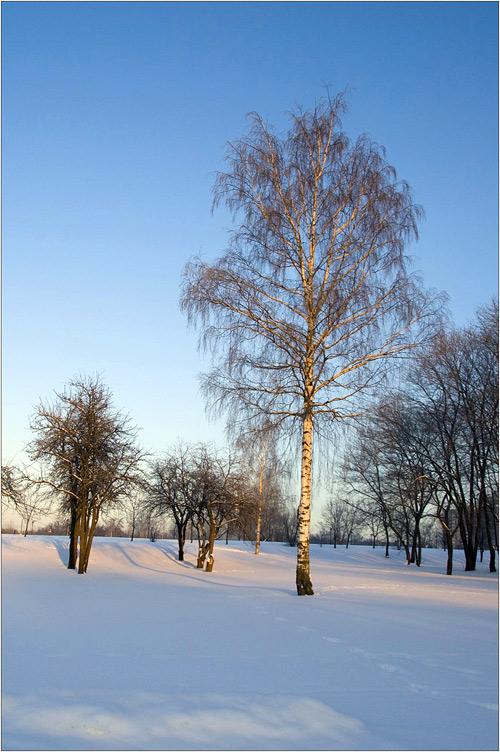 Зима в Царицыно. Белая берёзка