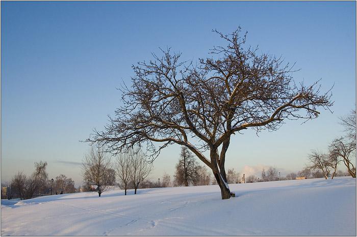 Царицыно. Дерево