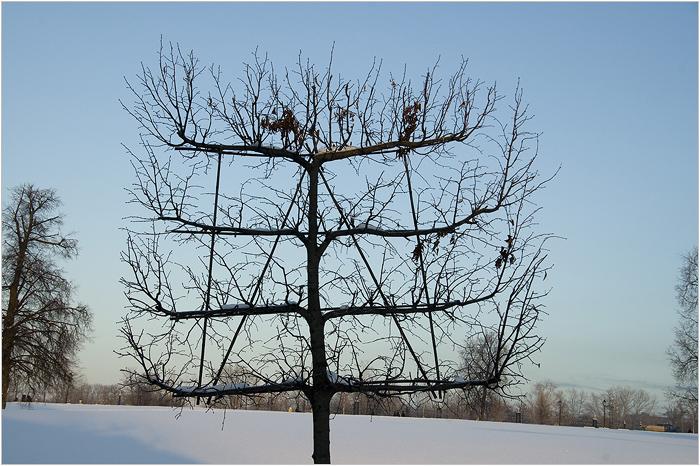 Царицыно. Распятое дерево